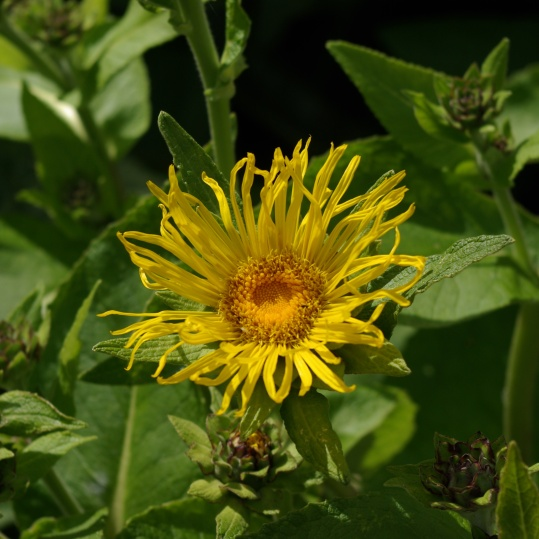 Taken at Althaea Healing Garden by Isha